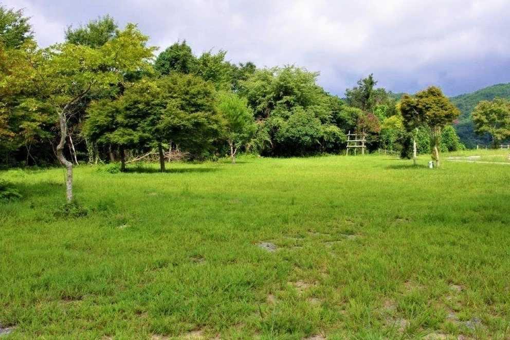 北房もみじ公園 の公式写真c16302
