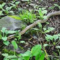 川遊び中にヘビと遭遇(笑)