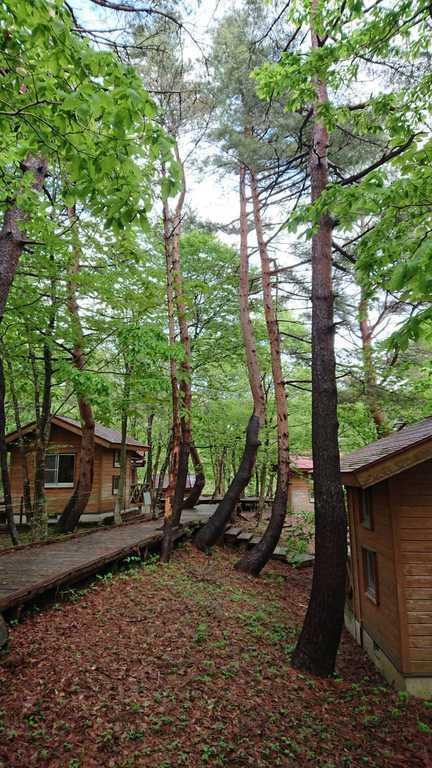 医王の里オートキャンプ場 の写真p