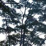群馬県 わらび平森林公園キャンプ場の投稿画像 22605