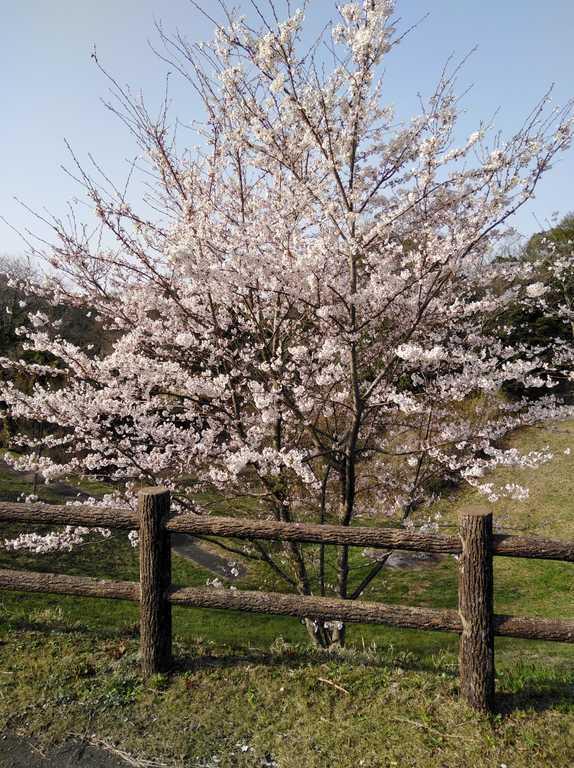 秋吉台家族旅行村 の写真p