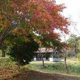 岡山県 津黒高原キャンプ場の投稿画像 23067