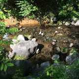 栃木県 那須高原アカルパの投稿画像 26114