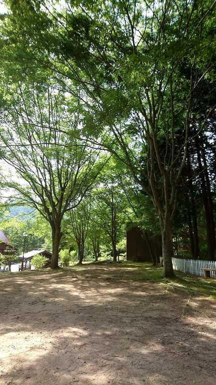 丹波悠遊の森 の写真p