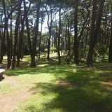 茨城県 大洗キャンプ場の投稿画像 26072