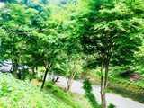 山梨県 原始村そば処キャンプ場~日本最古のゲストハウス~の投稿画像 25530