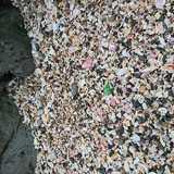 千葉県 白浜フラワーパークの投稿画像 26305