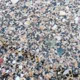 千葉県 白浜フラワーパークの投稿画像 26306