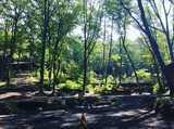 長野県 キャンピングフィールド木曽古道の投稿画像 29121