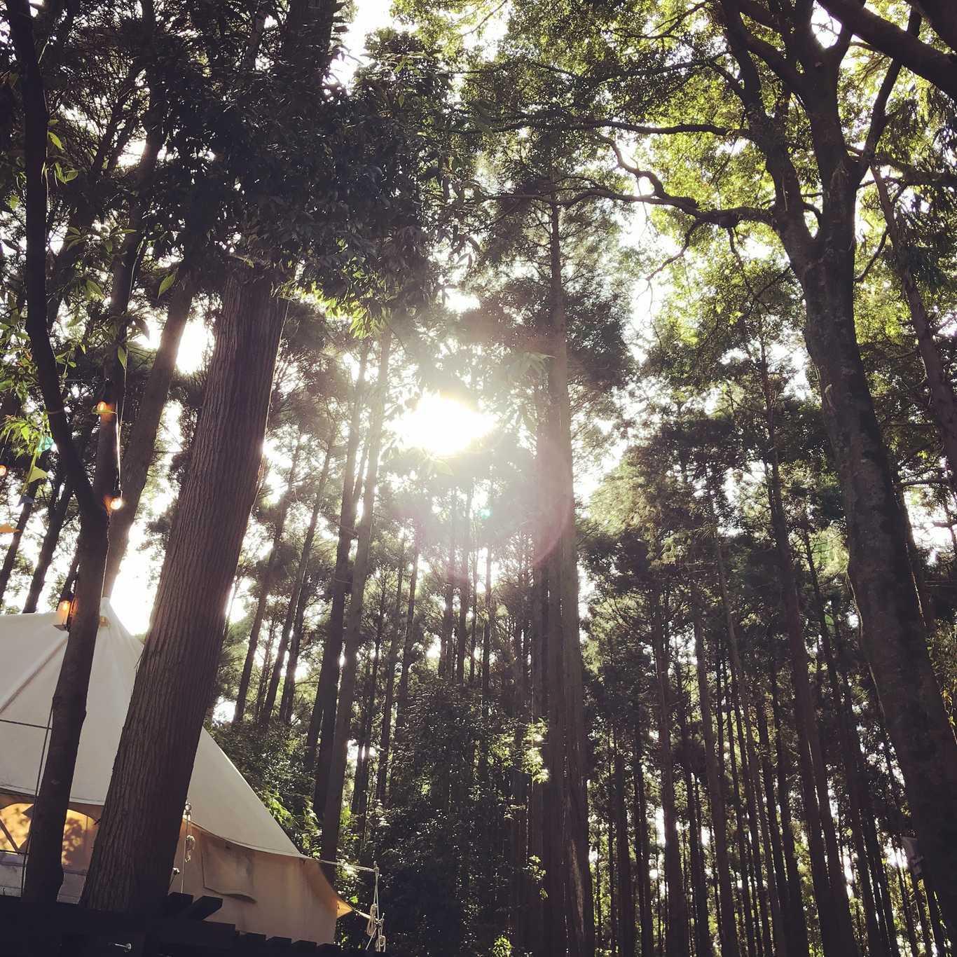 Camping GREEN(キャンピンググリーン) の写真p