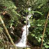 長野県 千年の森自然学校の投稿画像 27987