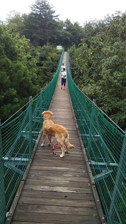 長岡市おぐに森林公園 の写真p