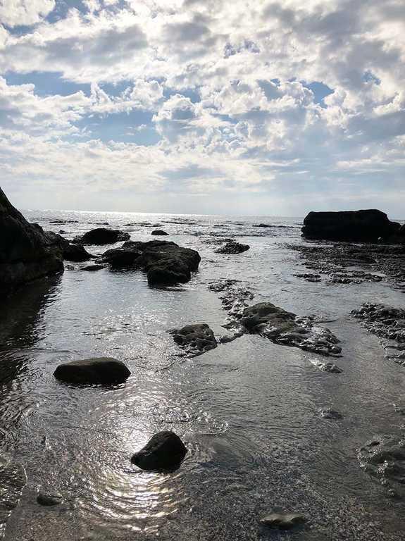 白浜フラワーパーク の写真p