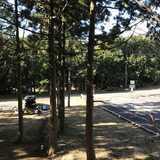 静岡県 細野高原ツリーハウス村キャンプ場の投稿画像 31983