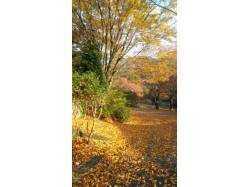 熊本県 古代の里キャンプ村 の新着関連写真t2185(2)