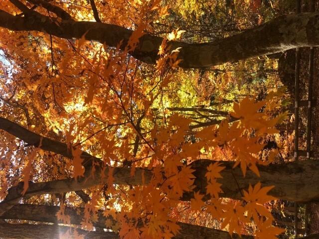 山梨県 みずがき山森の農園キャンプ場 の新着関連写真t103(1)