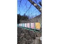 山梨県 ほうれん坊の森キャンプ場 の新着関連写真t124(1)
