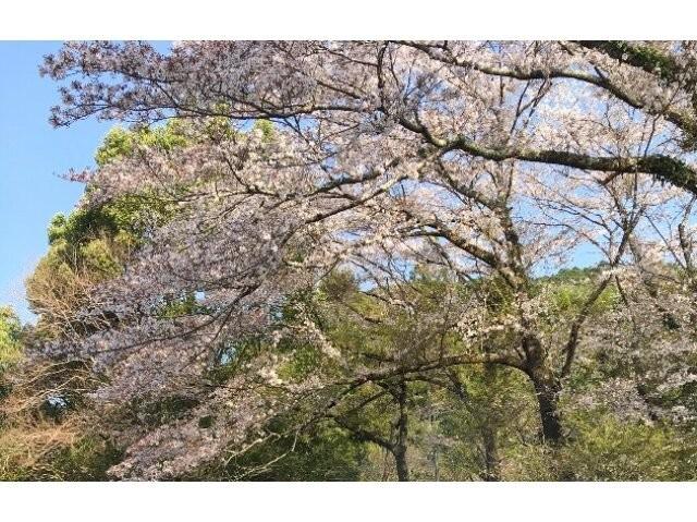静岡県 明野キャンプ場 の新着関連写真t103(1)