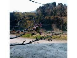 島根県 カヌーの里おおちオートキャンプ場 の新着関連写真t551(1)