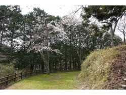 兵庫県 天滝公園キャンプ場 の新着関連写真t1687(1)