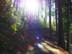 岡山県 たけべの森公園オートキャンプ場 の新着関連写真t1415(1)