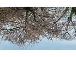 新潟県 海が見えるコテージ&キャンプ の新着関連写真t1516(1)