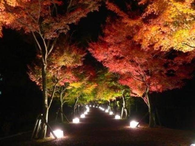 山梨県 富士山リゾートログハウス ふようの宿 の新着関連写真t103(1)