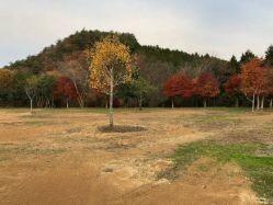 岡山県 北房もみじ公園 の新着関連写真t735(1)