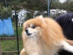長野県 ペンションマドンナ  ペットとキャンプ の新着関連写真t3415(1)