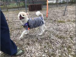 長野県 ペンションマドンナ  ペットとキャンプ の新着関連写真t3430(1)